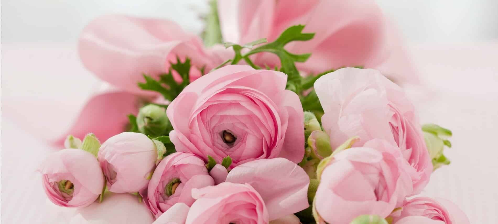 Pale pink peonies lie in a bouquet wrapped in a pink satin ribbon.